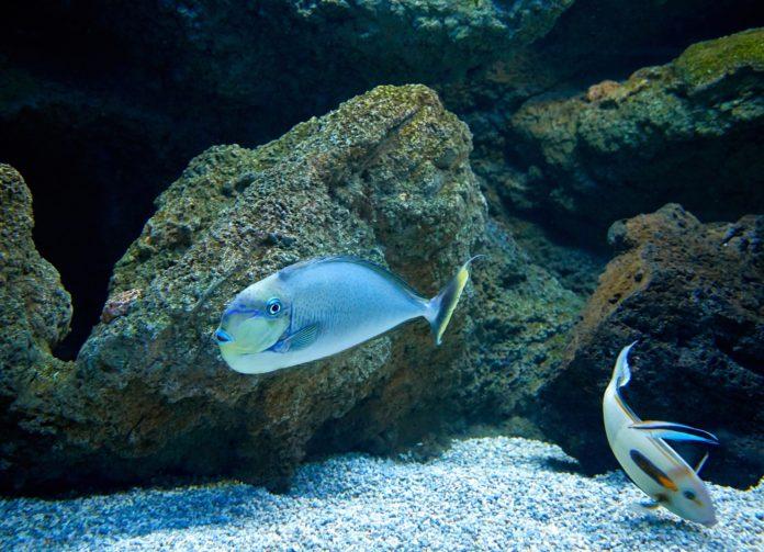 fishes swimming in marine aquarium